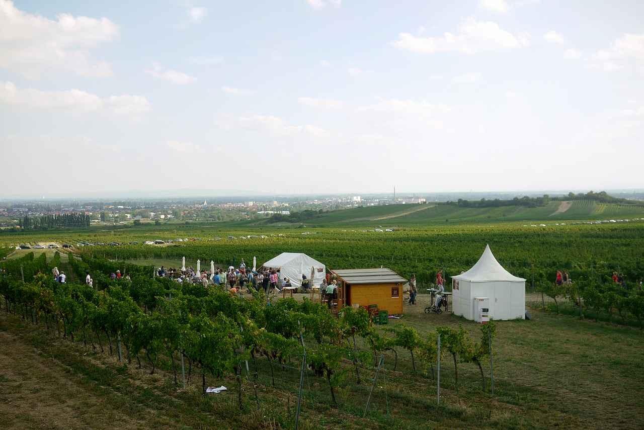 そこからの眺め。右の丘がマンデルヘーエの丘