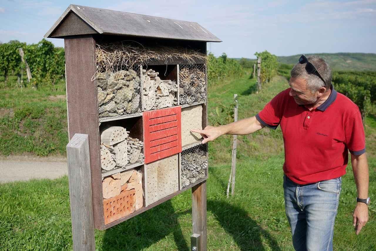 ハチ&小鳥の巣箱。カンプタールの畑には付近のワイナリーが自主的に設置した楽しい有用オブジェが一杯