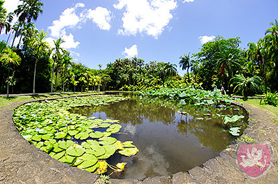 Pamplemousse Garden Mauritius