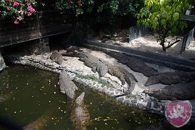 Vanille Crocodile Farm, Krokodile