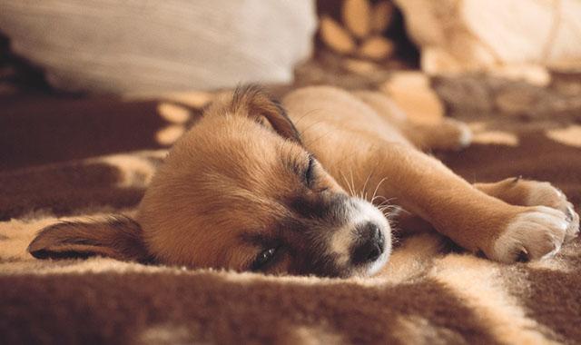 家の中に犬が落ち着ける場所を作ってあげる