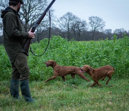 Schussfestigkeit - VJP Jagdhundeseminare von Hunt & Hound