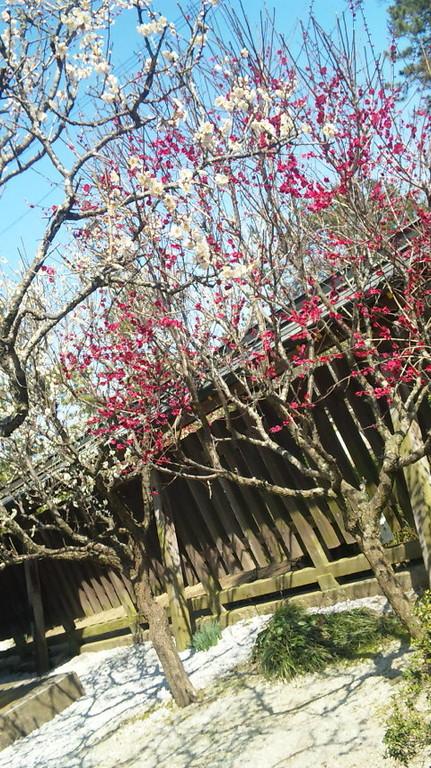 もうすぐ春です!