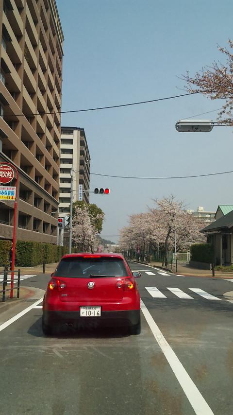 街中にもたくさんの桜・・・・