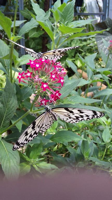 フラワーパーク内の蝶の温室