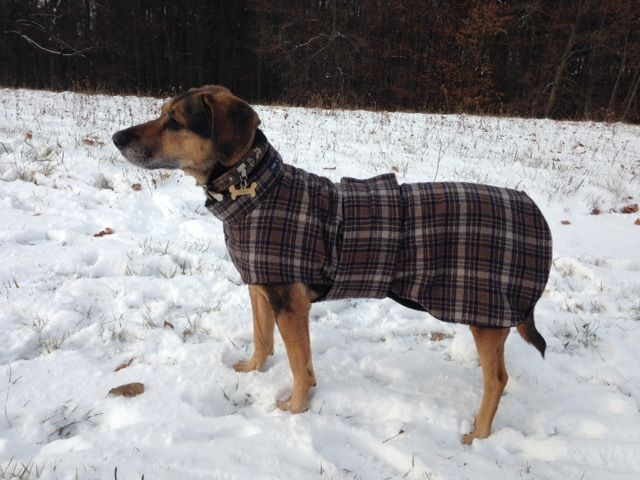Mantel mit Kragen und Bauchgurt, Rücklänge 67 cm, Preis 103,00 €