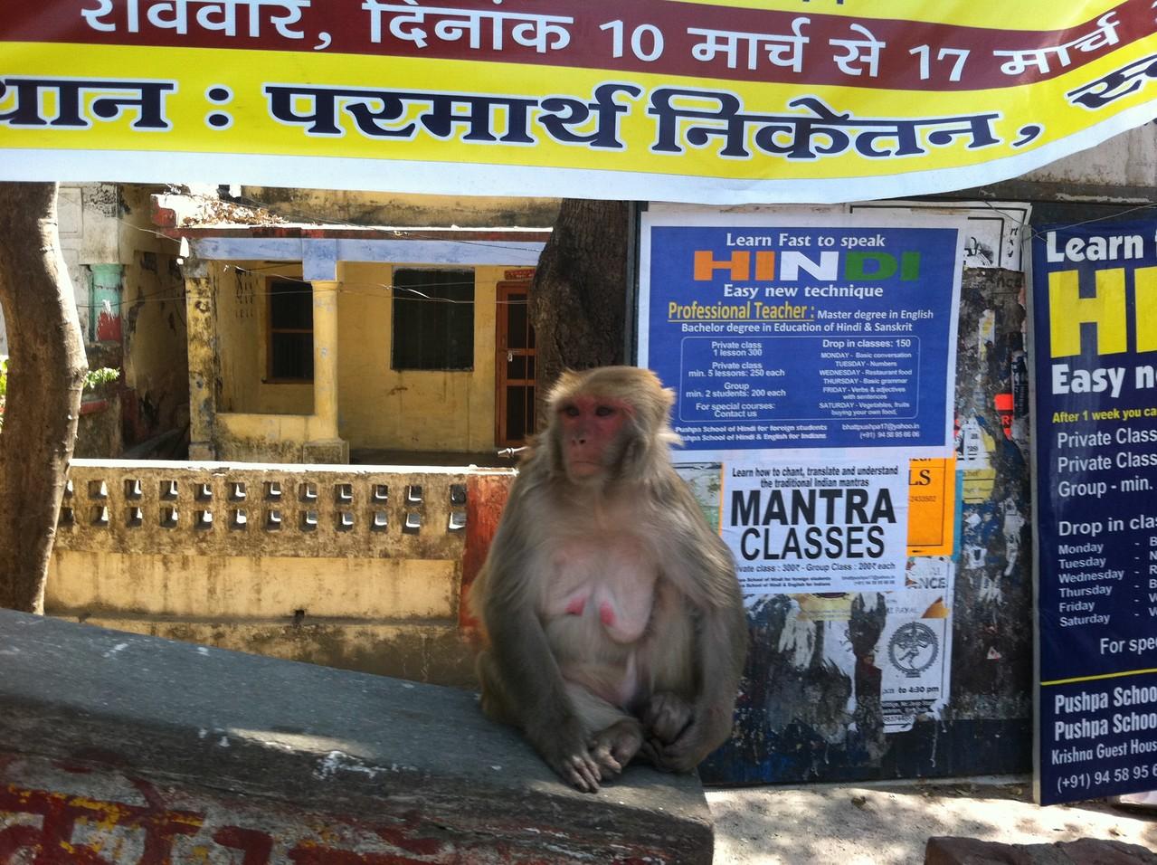 monkey part2