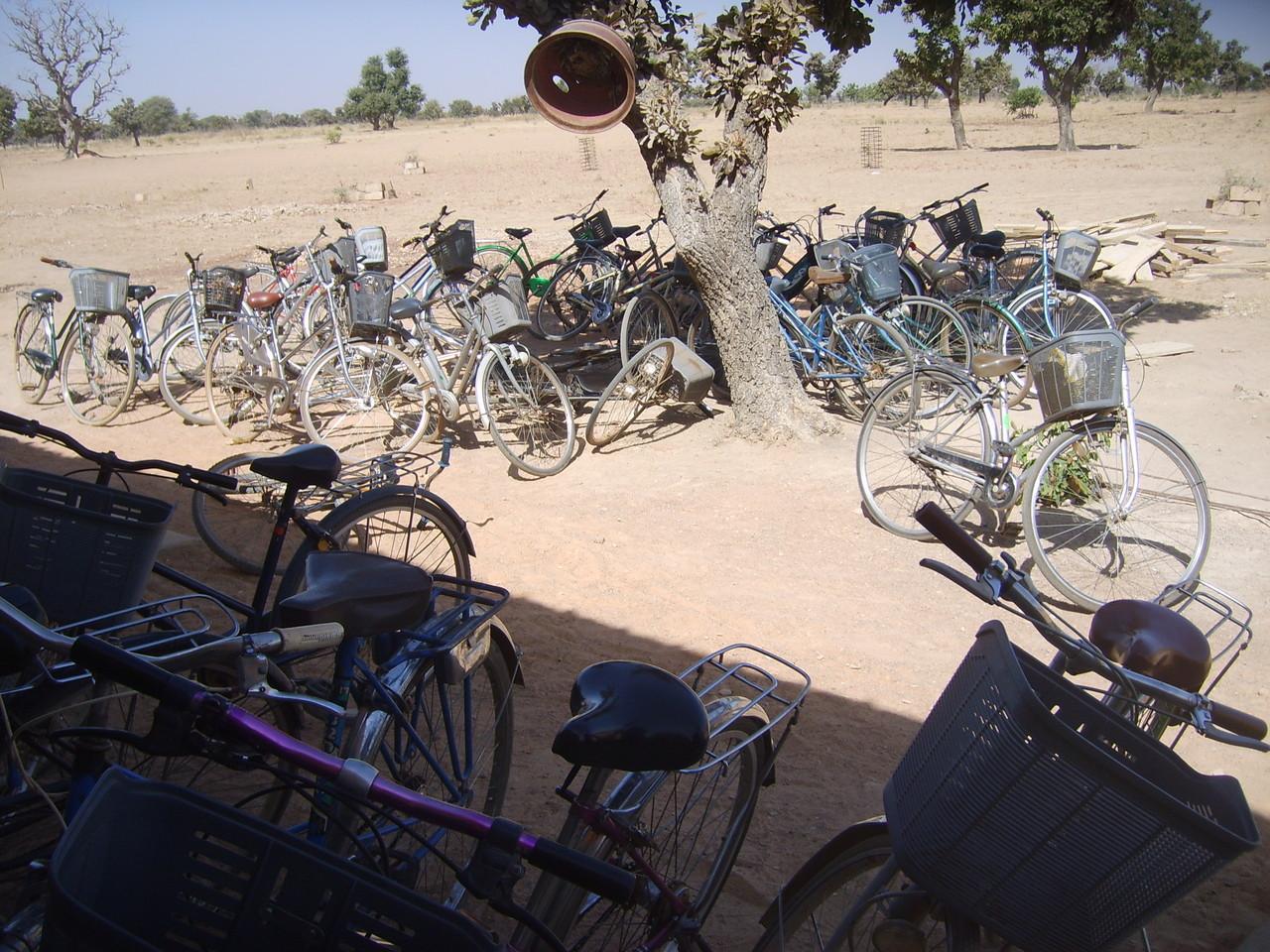 Les vélos sont nombreux
