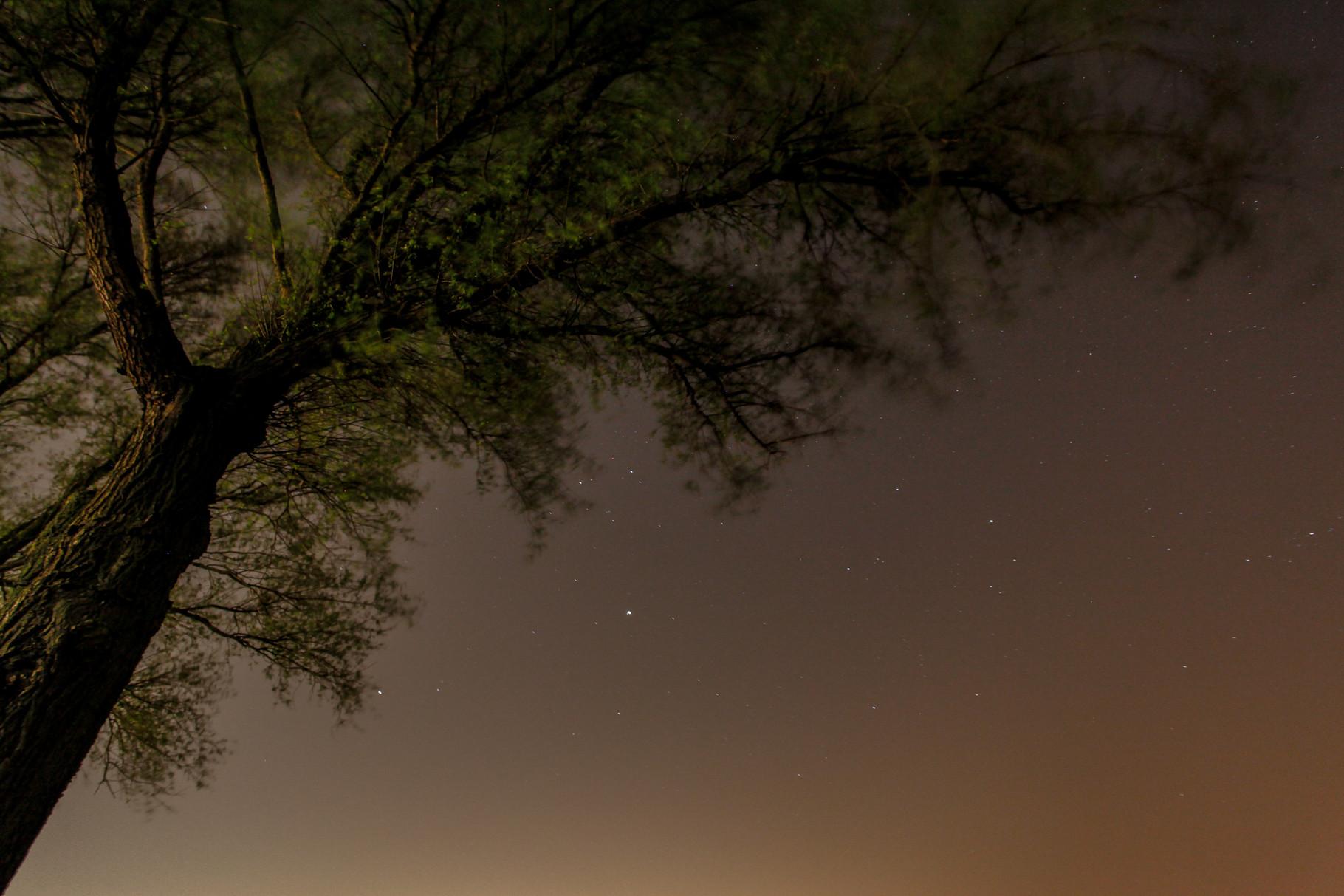 Nachtfoto boom met sterren - made by Rens