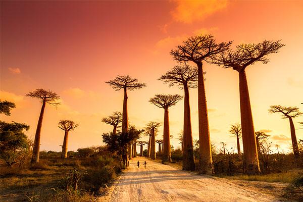 fantastisches#Madagaskar