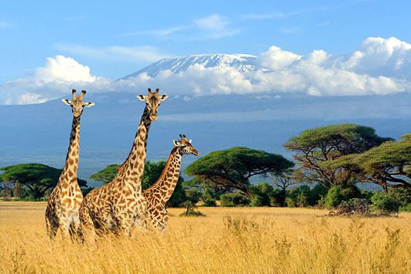 fantastisches#Kenia
