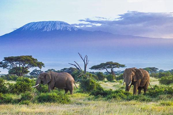 fantastisches#Tanzania
