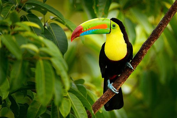 fantastisches#Mittelamerika