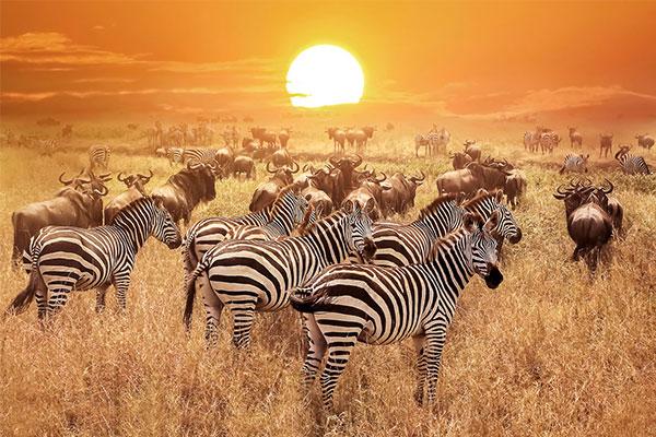 fantastisches#Afrika