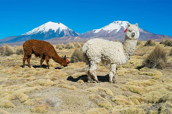 fantastisches#Südamerika
