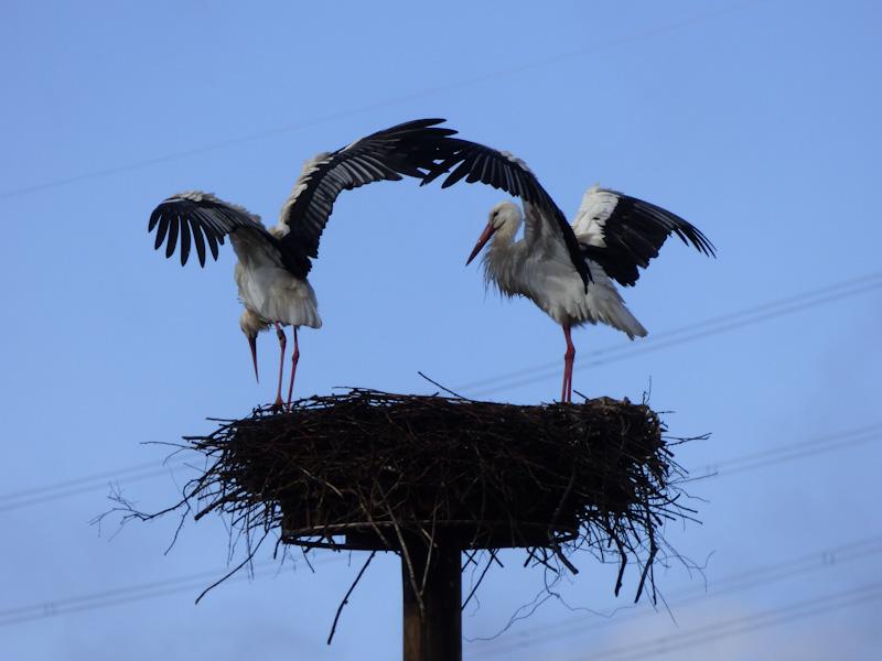 10. März: Trocknen nach Regenschauer im Hachborner Nest! - Foto: Miriam Wagner