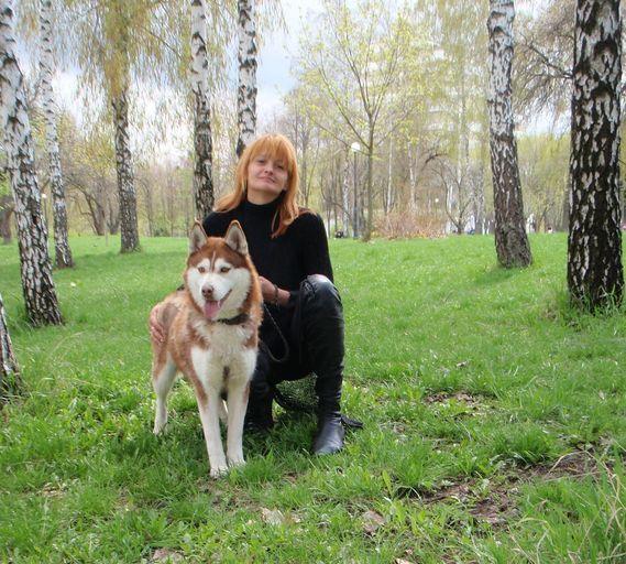 Сибирский хаски.Фото.