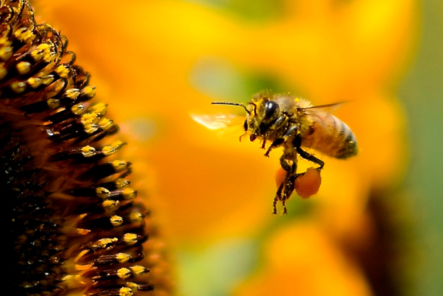 蜂蜜はミツバチの酵素もよって糖質が分解