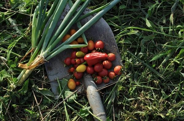 小さく形は不揃いでも、力強い味のする野菜たち。