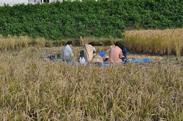 田んぼでご飯も食べます。