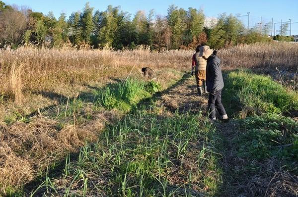 いわゆる放任栽培や自然農とも違い、畑に寄り添います。