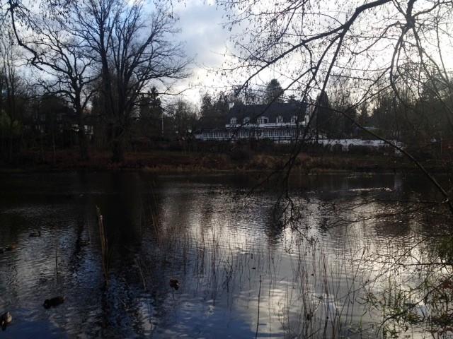 05.01.15: der Mühlenteich im Sachsenwald. Der erste Cross-Lauf (17 km)