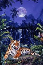 reiki tigre