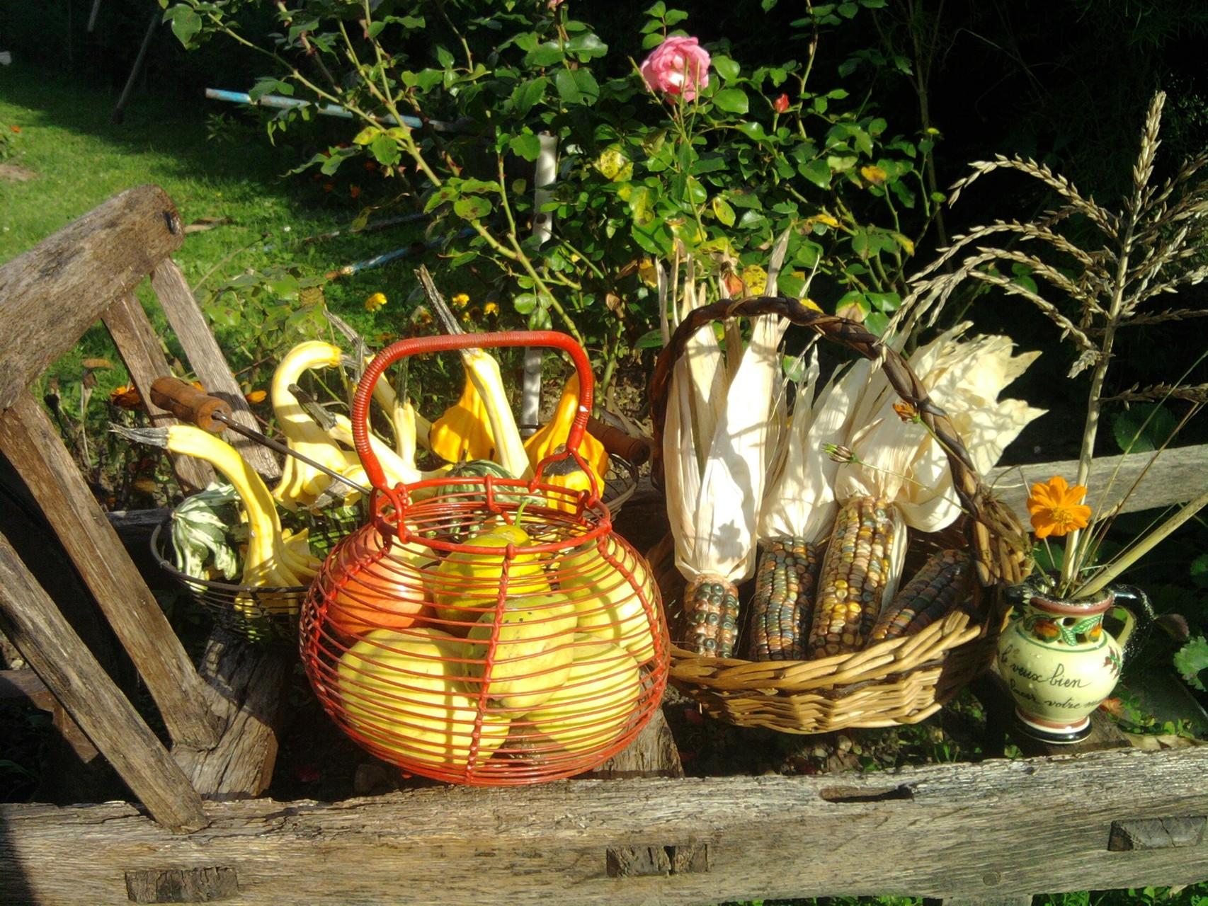 Les couleurs du jardin potager