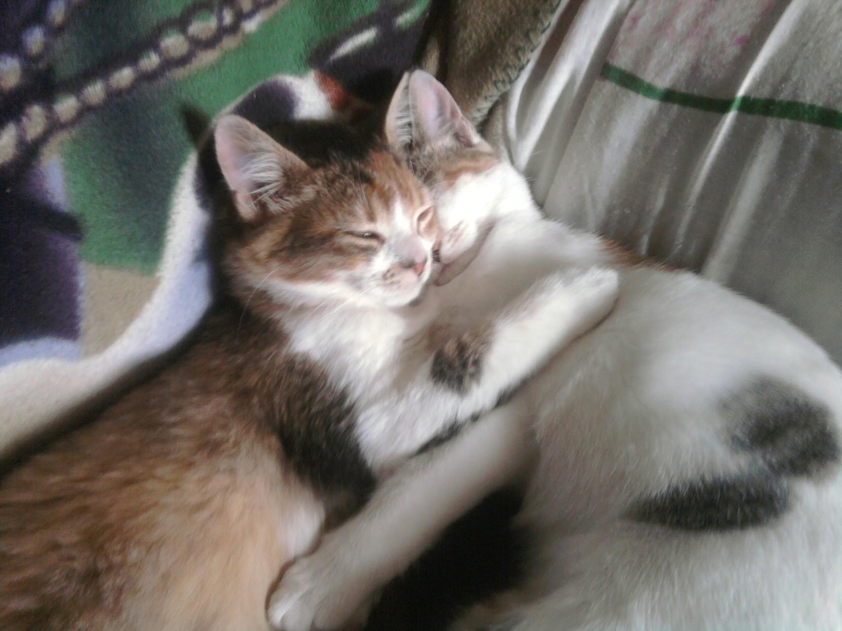 Junkie et Jalouse dorment en coeur