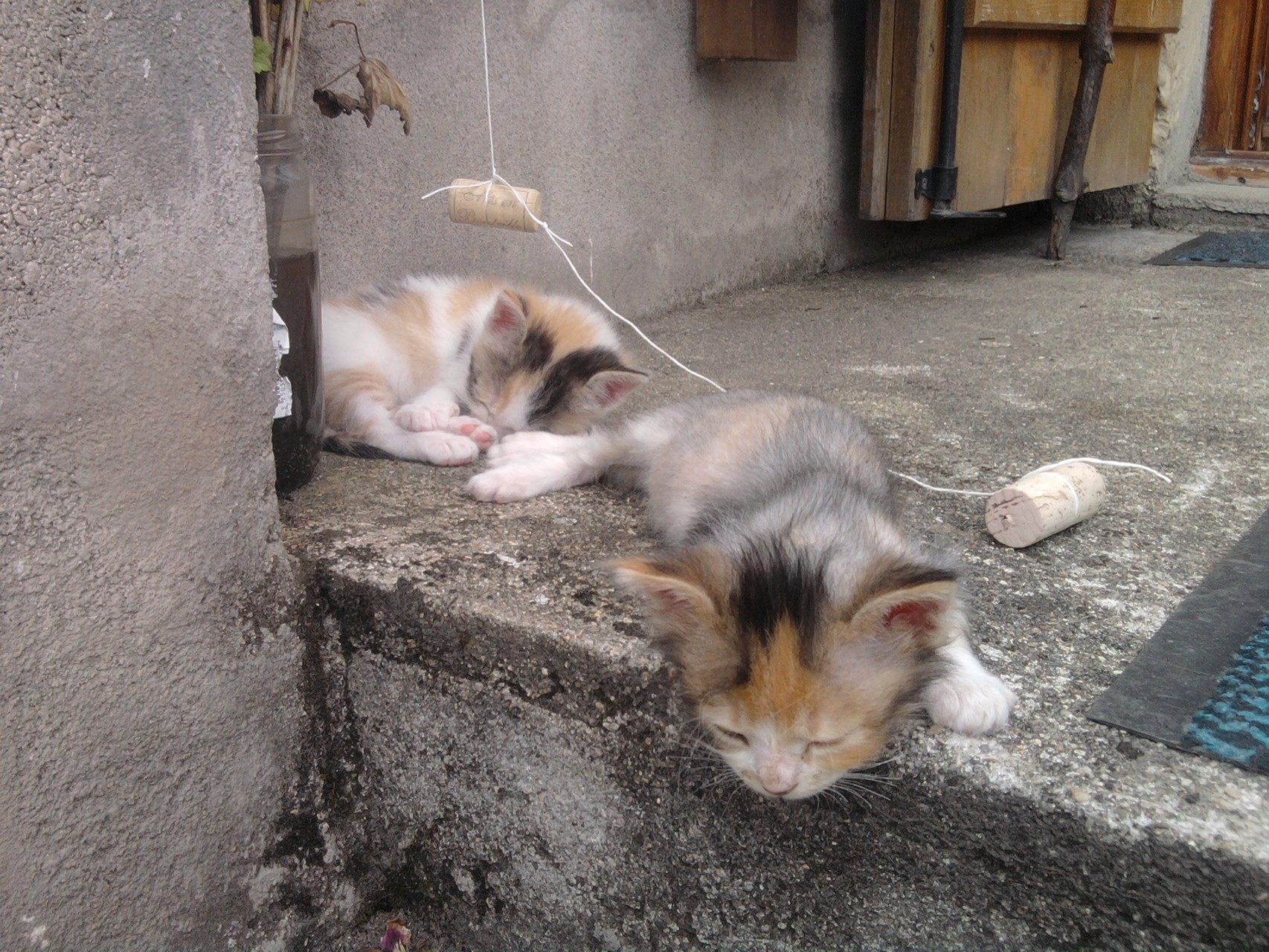Junkie et Jalouse sieste sur le perron