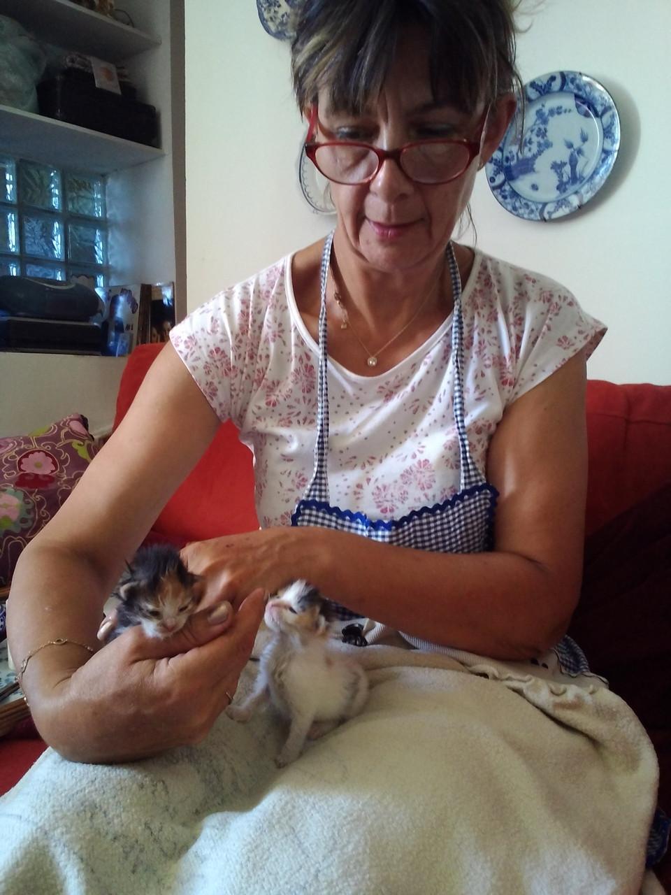 Les bébés chattes âgées de 2 semaines