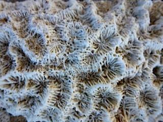 Bild: Tote Korallen am Strand