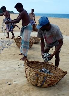 Bild: Fischer sortieren den Fisch