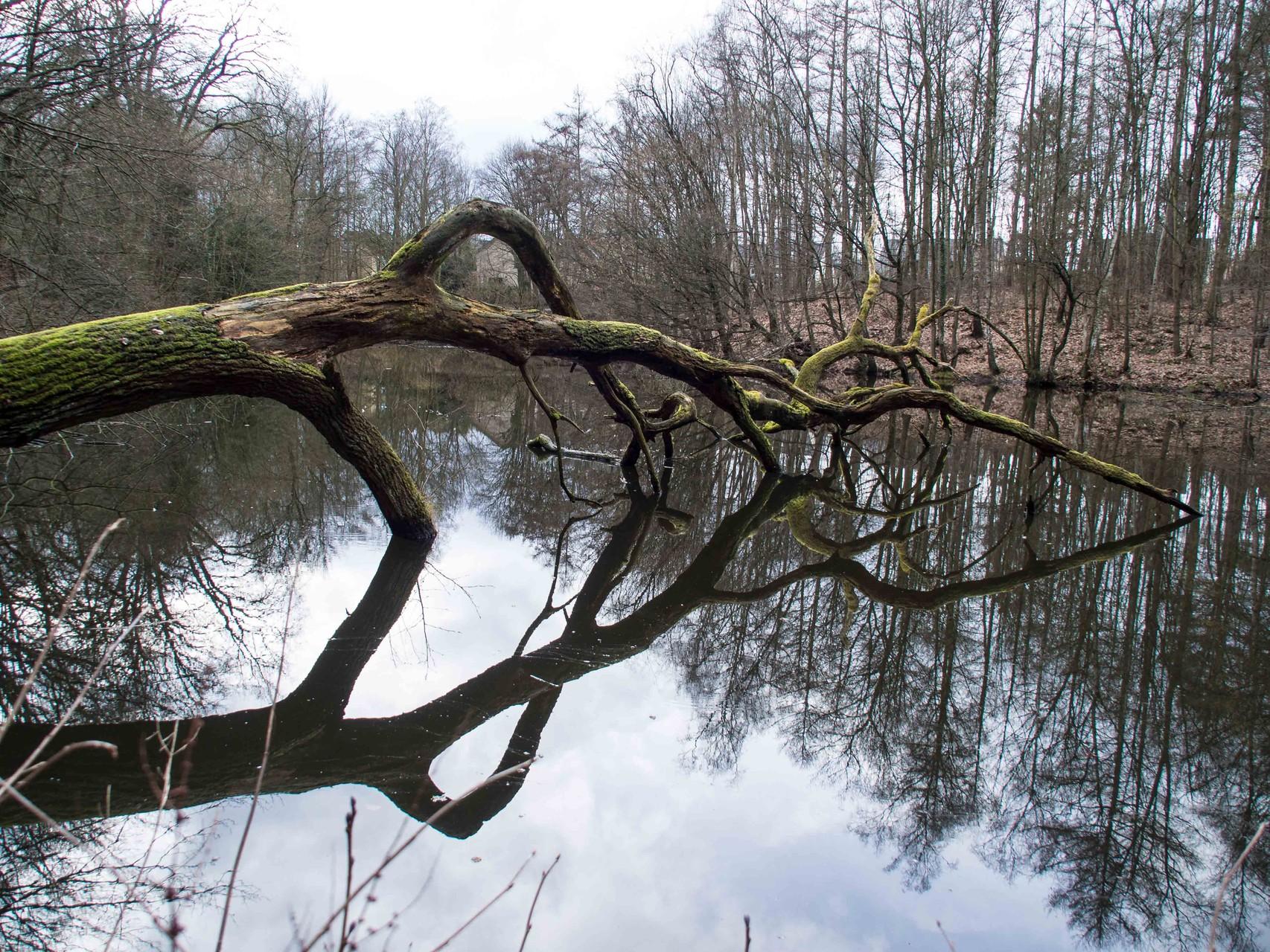 Bild: Spiegelung der Bäume im Wasser