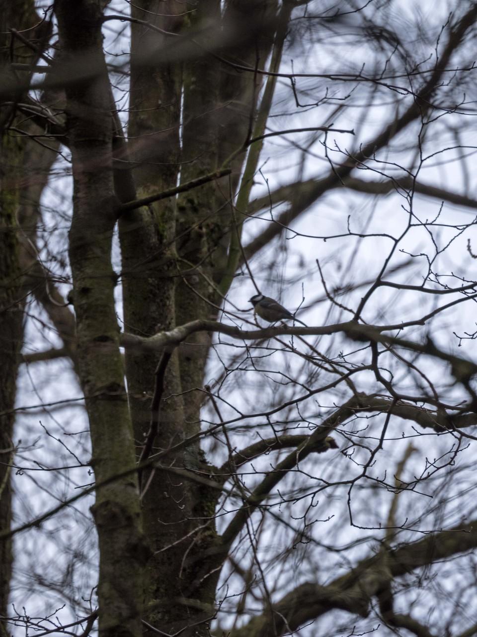 Bild: Der Baum