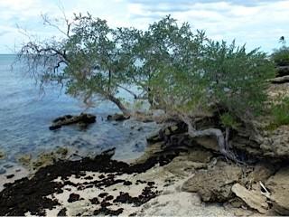 Bild: Baum wächst ins Meer