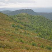 Bild: Landschaft über der Baumgrenze