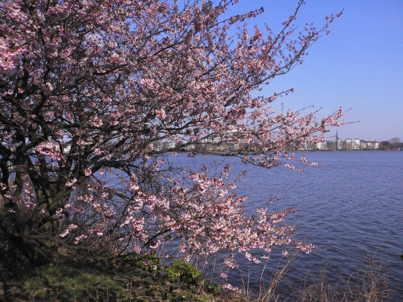 Frühling an der Außenalster