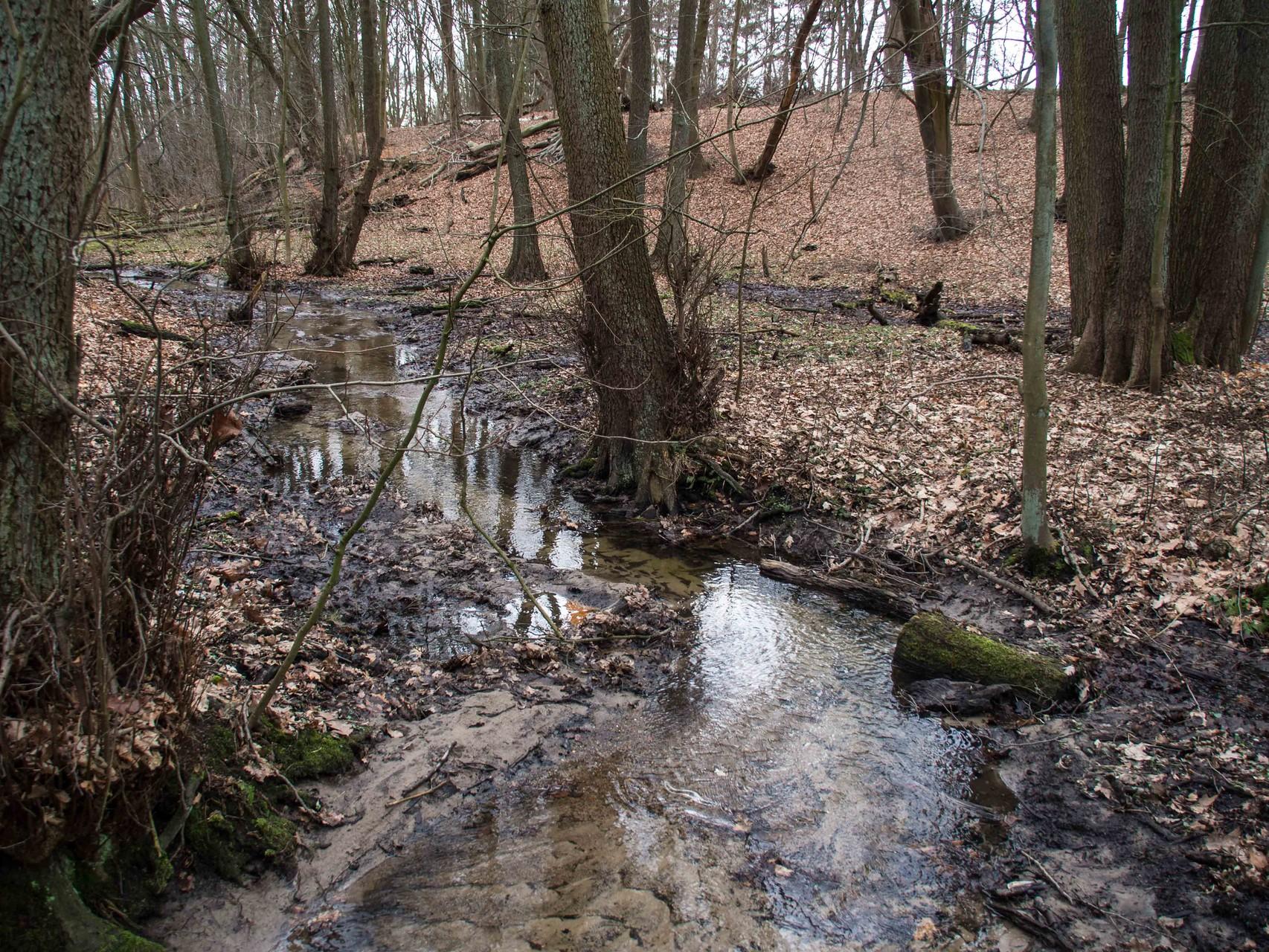 Bild: Spiegelung im Flusswasser