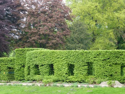 Bild: Äußere Heckenwand im Rosengarten