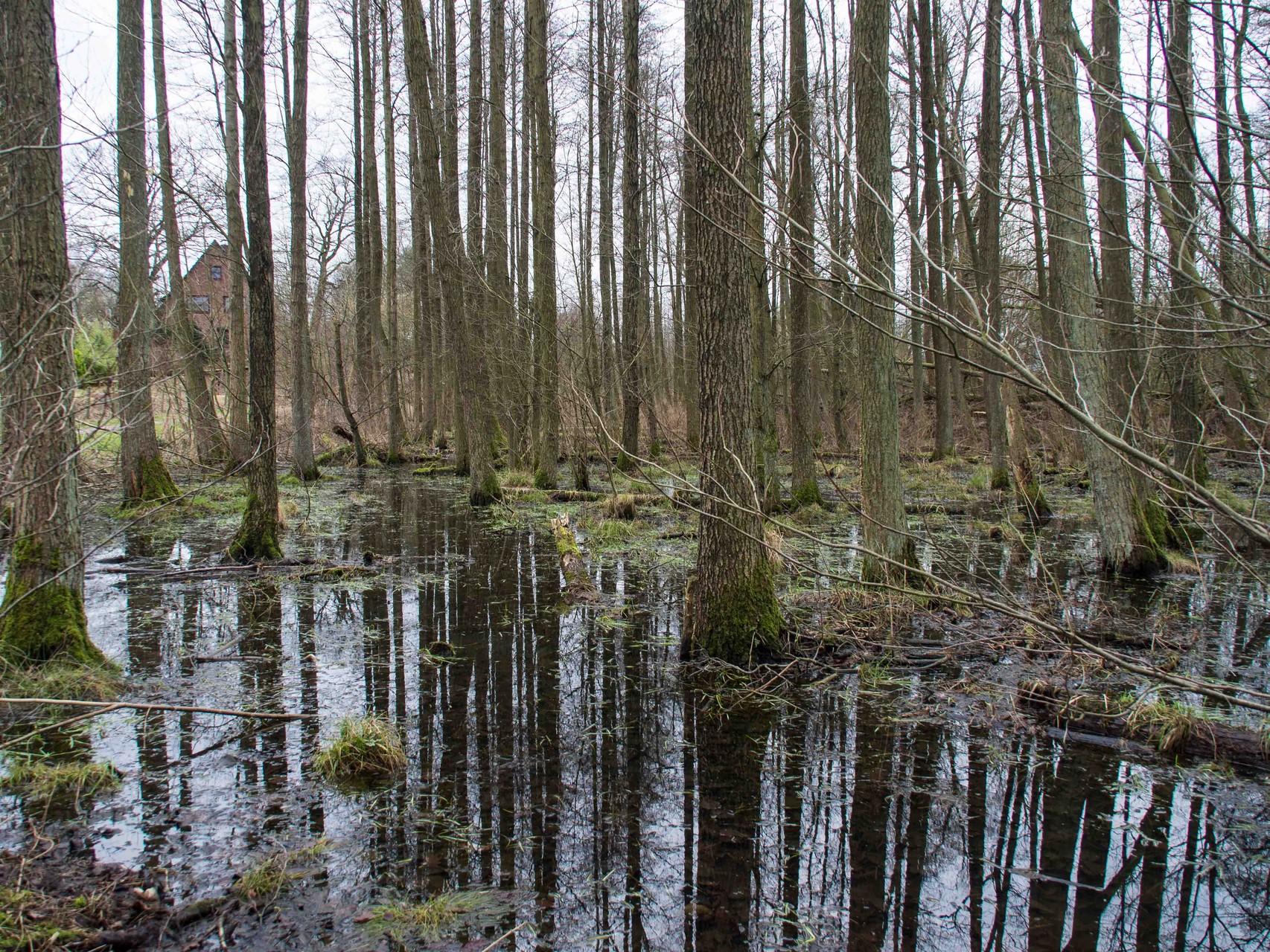 Bild: Spiegelung der Bäume im See