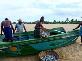 Bild: Fischer teilen den Fisch auf