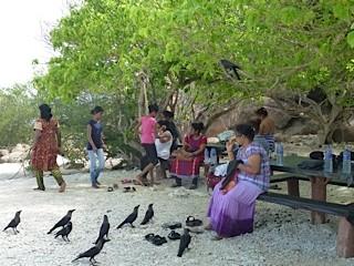Bild: Vögel warten auf Futter