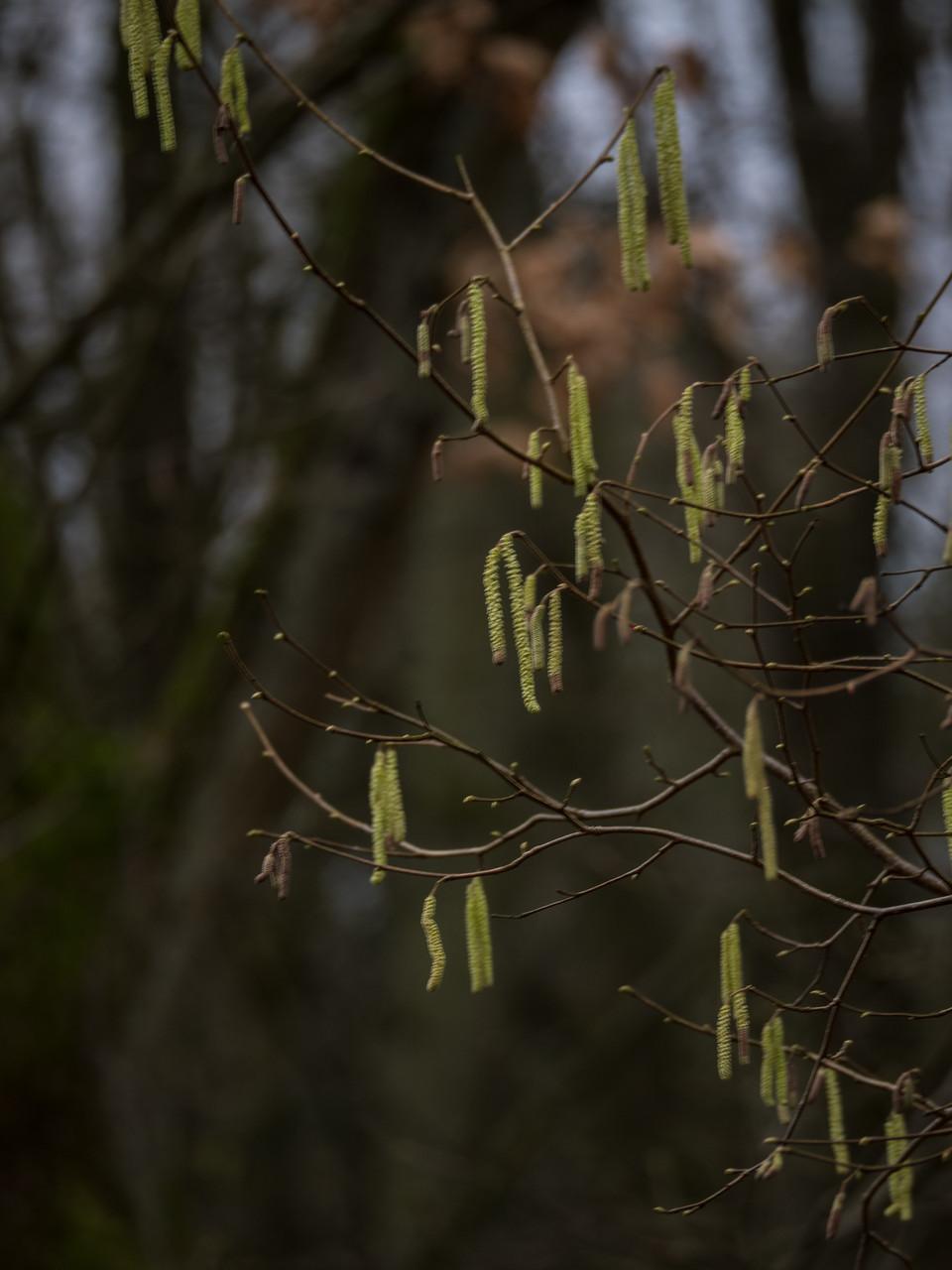 Bild: Der Wald