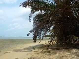 Bild: Palmen am Strand