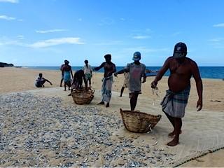 Bild: Fischer legen die Fische zum Trocknen aus