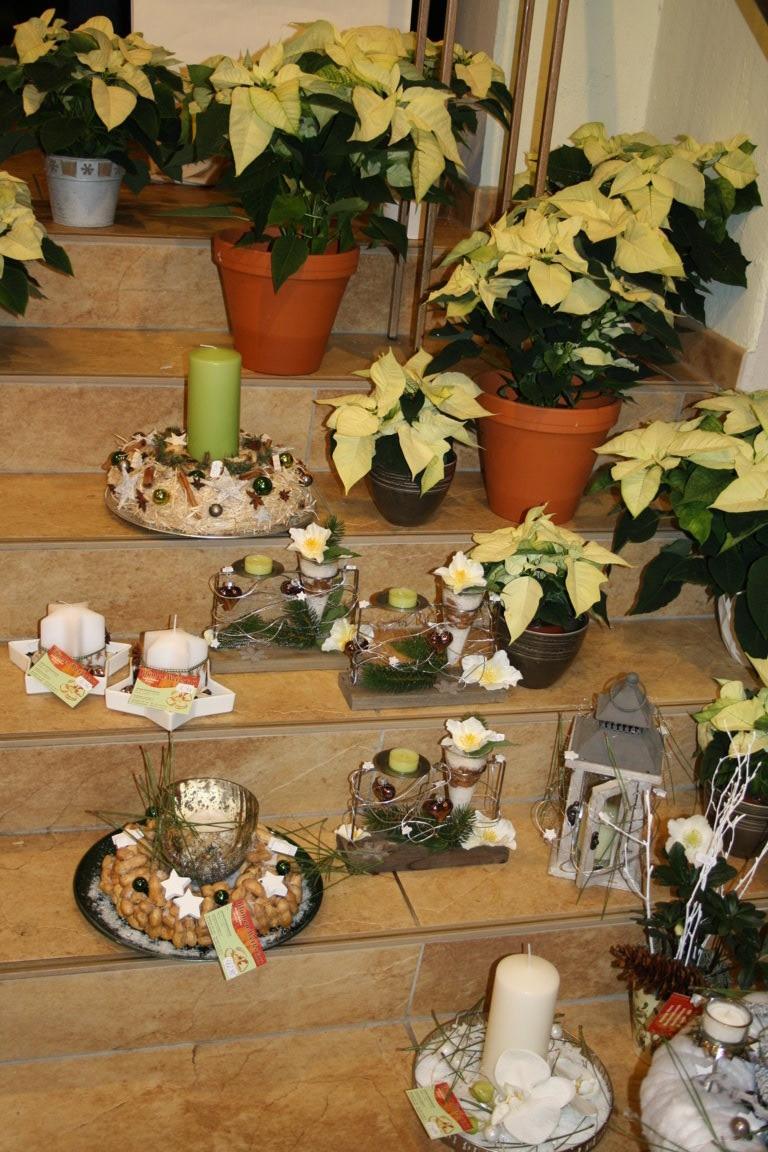 Floristische Kreationen zum Advent: Sternstunden in der Blumenwerkstatt Dresden