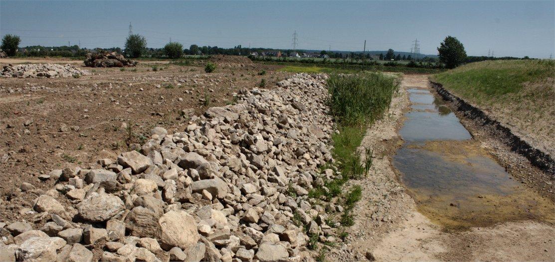 Alles was das Krötenherz begehrt: Laichgewässer, Steinhaufen zum Überwintern, offener Boden zum Graben (Bild: K. Weddeling)
