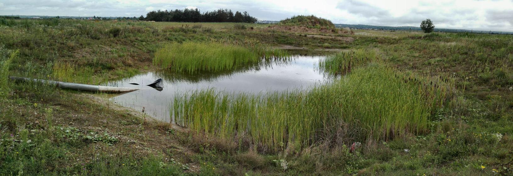 Neue Heimat: 2015 wurde dieses Laichgewässer bei Swisttal angelegt (Bild: K. Weddeling)