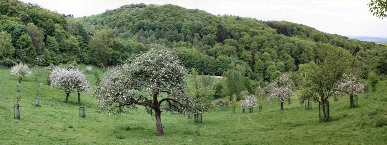 Löwenburg im Siebengebirge. Bild: D.Oprach